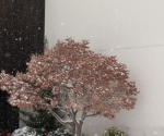 whitevillesnow2011_02