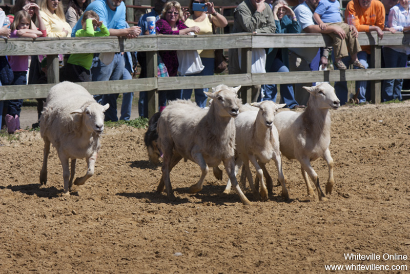 farmfest2015_098.jpg